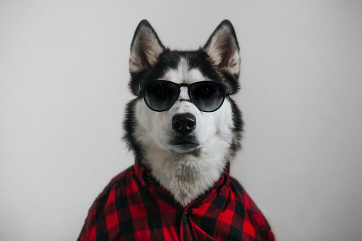 cool dog with sunglasses - neurodiverse autism financial planning services farmington ct